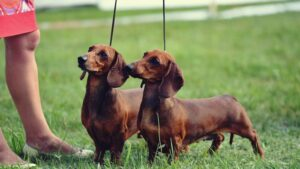 šunų paroda druskininkai